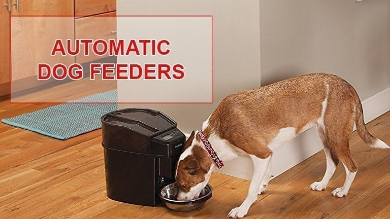 Best automatic dog feeders