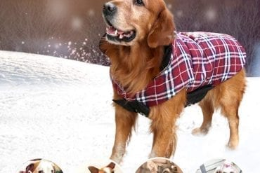 Best dog Sweaters